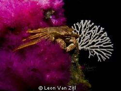 Crab blanket by Leon Van Zijl