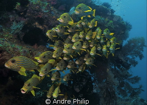 """101 Sweetlips"" by Andre Philip"