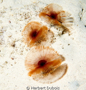 Bari Reef Bonaire by Herbert Dubois