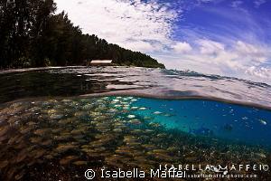 """MIDDLE LAND"" by Isabella Maffei"