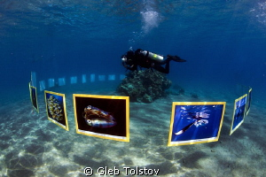 "Underwater photo exhibition ""Treasures of the Sea 2013"" by Gleb Tolstov"