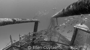 Horse Eyed Jacks at Ex-USS Kittiwake by Ellen Cuylaerts