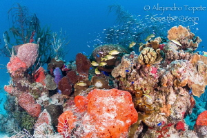 Reef in Chinchorro, Mahahual mexico by Alejandro Topete
