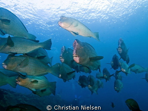 A nice encounter an early morning at the Liberty Wreck in... by Christian Nielsen