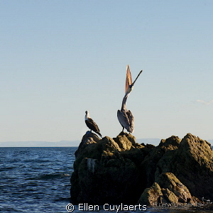 Diving the midriff islands, this was a familiar sight on ... by Ellen Cuylaerts
