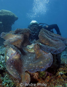 A giant clam in raja ampat - Now I know, where the names ... by Andre Philip