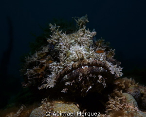 Scorpionfish; snoot and wet lens inon. by Abimael Márquez
