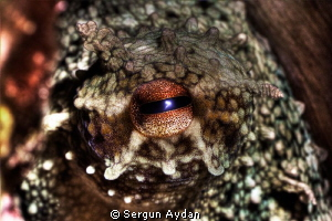 Octopus Eye by Sergun Aydan