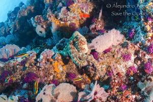 Octopus walking on the Reef, Puerto Vallarta Mexico by Alejandro Topete