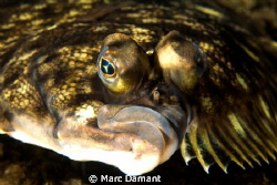A face only a mother could love! Canon 100mm macro and av... by Marc Damant
