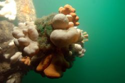 Dead mens fingers. Wreck of the 'Arizona' in the Firth of... by Grant Kennedy