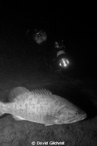 Diver approaches Bass during a night dive in the Niagara ... by David Gilchrist