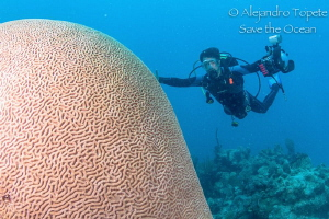 Huge Brain and Photographer, Chinchorro Mexico by Alejandro Topete