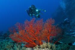 Dive into deep blue sea. Green Island,Taiwan. by Allen Lee