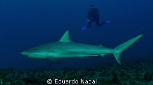 reef shark by Eduardo Nadal