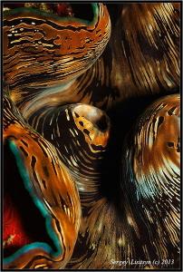 Tridacna maxima. by Sergey Lisitsyn