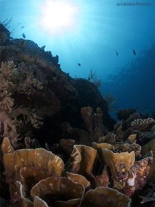Reef in Wakatobi by Iyad Suleyman