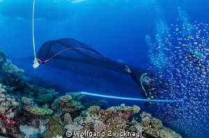 just swimming around the corner we almost got caught in a... by Wolfgang Zwicknagl