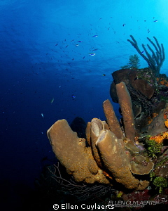 Classic wide angle shot of the healthy sponge growth at t... by Ellen Cuylaerts