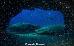 Diving in La Graciosa, part of Europe's largest marine re... by Alexia Dunand