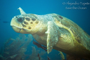 Cahuama huge, San Pedro Belize by Alejandro Topete