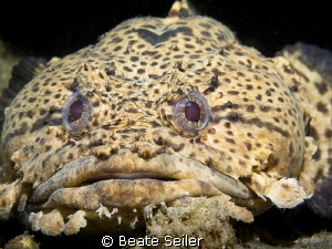 Toad fish by Beate Seiler