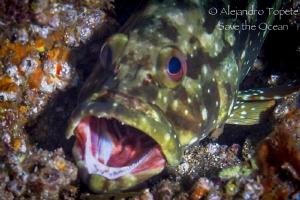 Open Mouth fish, Puerto Vallarta Mexico by Alejandro Topete