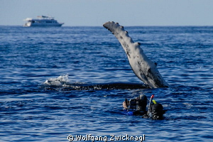 Almost slapped by a humpback whale ;-) by Wolfgang Zwicknagl