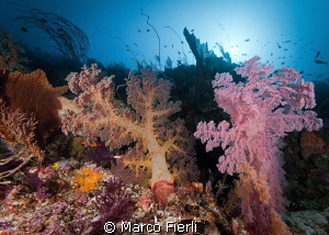 Wakatobi reef scape at 150ft by Marco Fierli