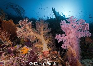 Wakatobi reef scape at 150ft by Marco Fierli