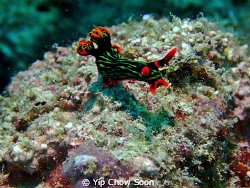 Taken at Pulau Mabul Dive Site , Sabah Malaysia by Yip Chow Soon