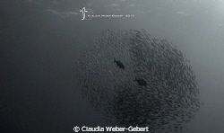 the swarm....