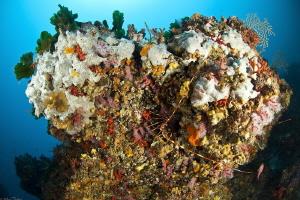 coralligenous assemblage by Mathieu Foulquié