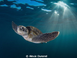 Me and You. Green Turtle. Endangered.  by Alexia Dunand