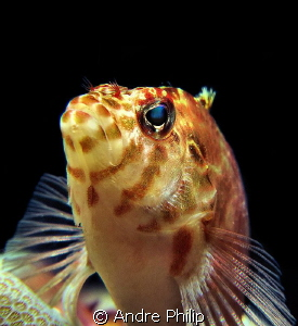 Hawkfish Portrait by Andre Philip