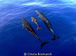 The sweet family! Stenella attenuata by Cinzia Bismarck