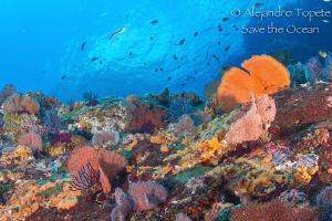 Beautifull Reef, Puerto Vallarta Mexico by Alejandro Topete