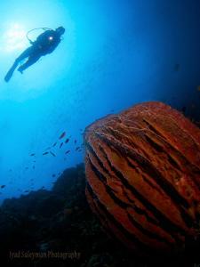Sponge & Diver by Iyad Suleyman