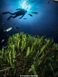 [:b:]Med Sea[:/b:] by Francesco Pacienza