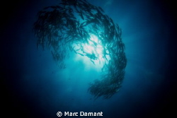 Burst of Jacks! by Marc Damant