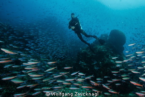 My buddy - obviously confused by the number of fish aroun... by Wolfgang Zwicknagl