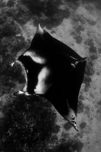 Snorkeling Komodo style by Reidar Opem