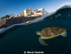 Green turtle surfacing to another world. Endangered. Tene... by Alexia Dunand