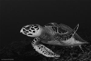 Turtle in B&W by Iyad Suleyman