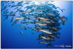 Red Sea, Egypt by Helmy Hashim