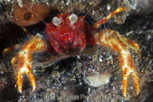 Bug-eyed Squat Lobster by Iyad Suleyman