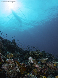 From Lembeh Strait by Iyad Suleyman