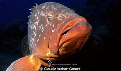 ...my new best friend 