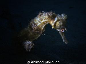 Seahorse by Abimael Márquez