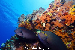 two surgeon fish hiding away from the current by Alistair Bygrave